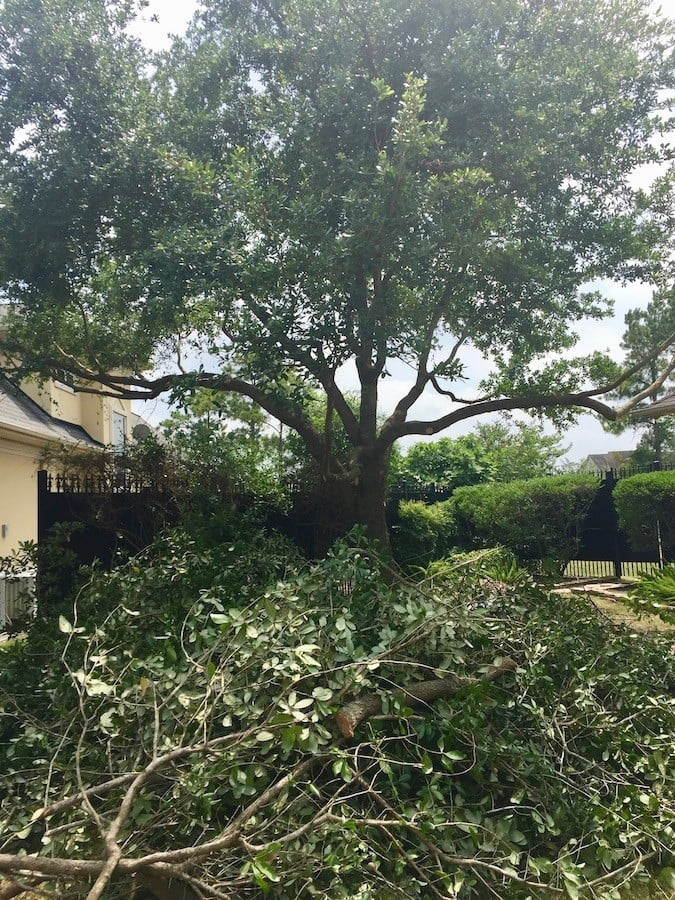 Landscape Tree Trimming Pruning Houston TX