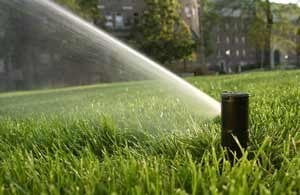 Lawn Water Needs Houston TX