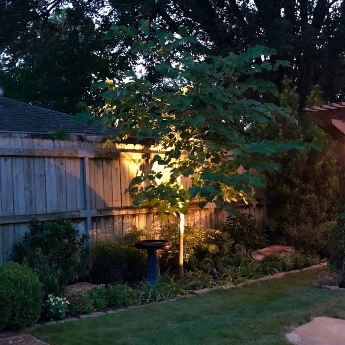 landscaping uplighting small tree 77056