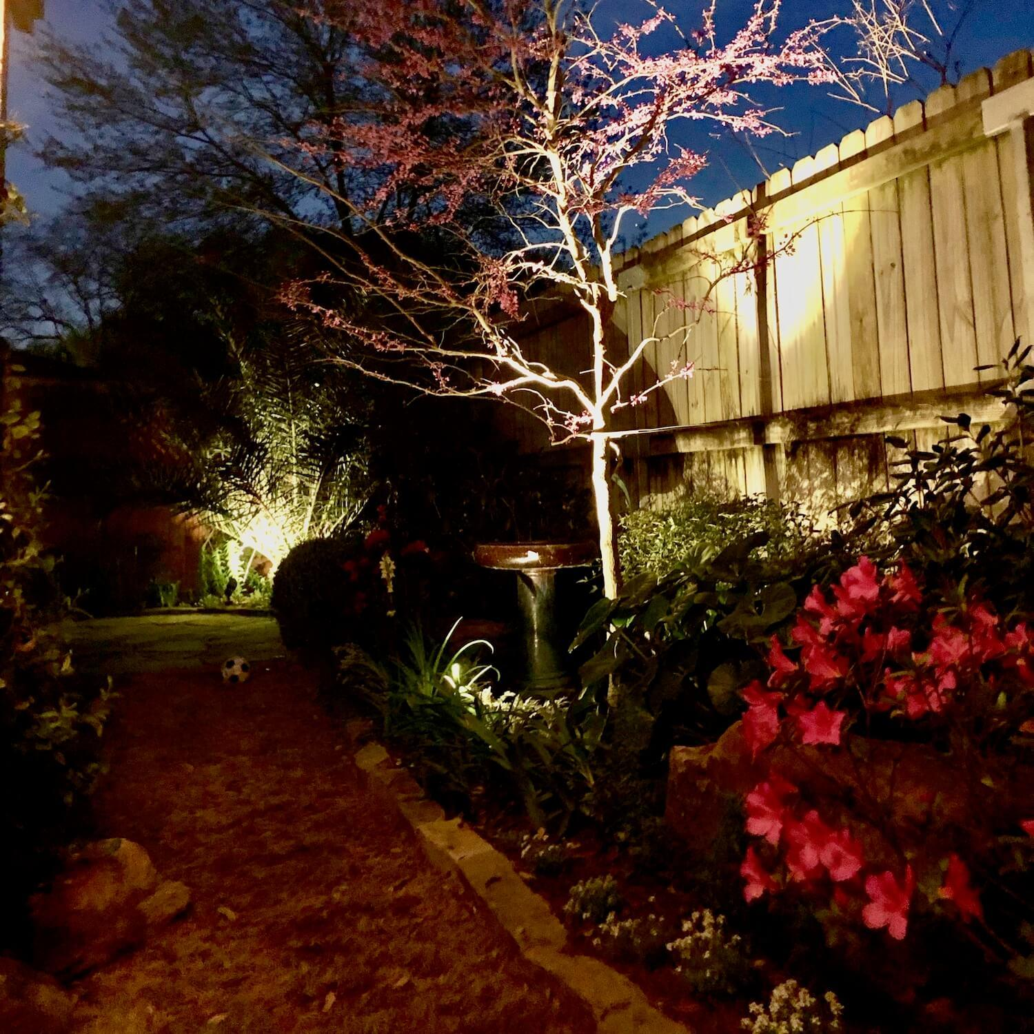 outdoor landscape lighitng up right tree backyard 77042