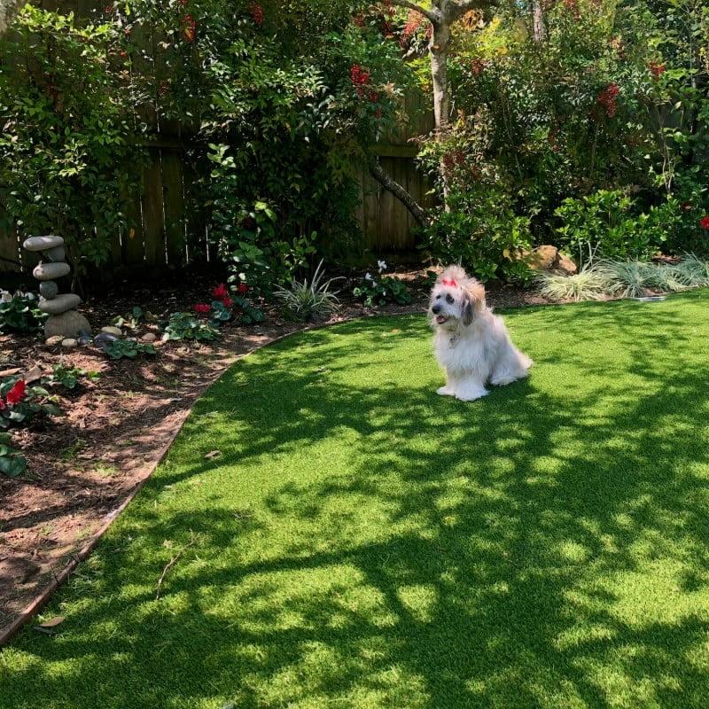 Artificial Grass Pet Friendly Turf Houston Tx 77042